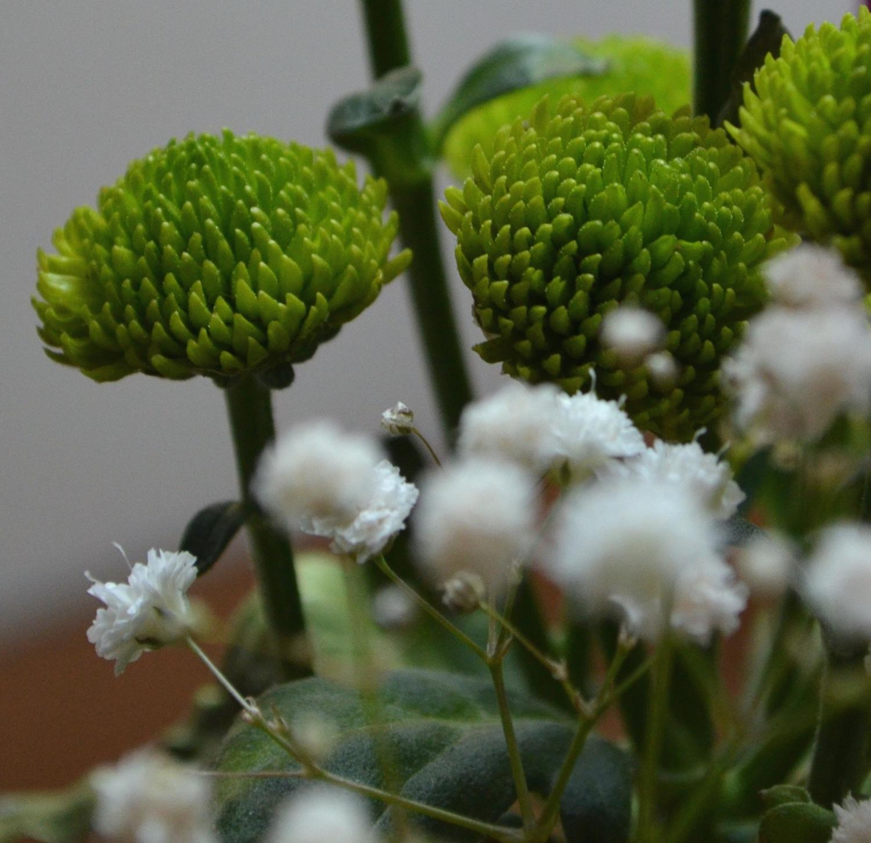 intimité florales Agnes clairand
