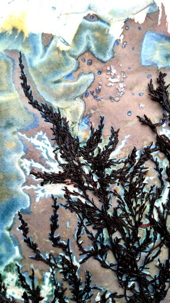 Cyanotypes Agnes Clairand